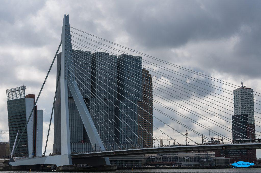 Rotterdam cosa vedere in 3 giorni: ponte erasmo