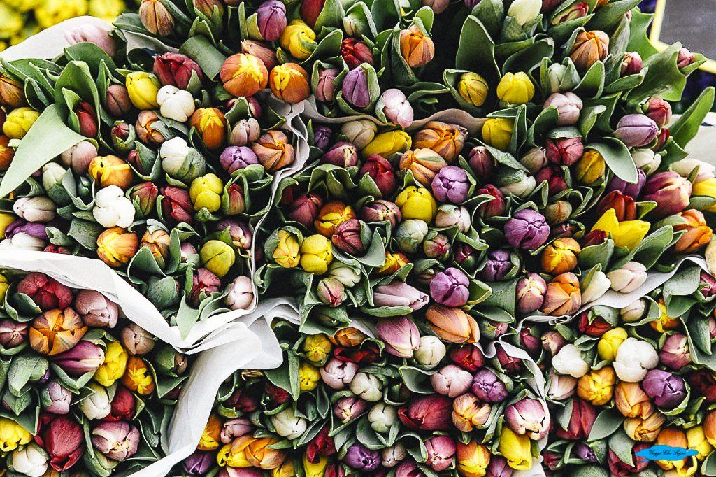 Mercato dei fiori ad Utrecht