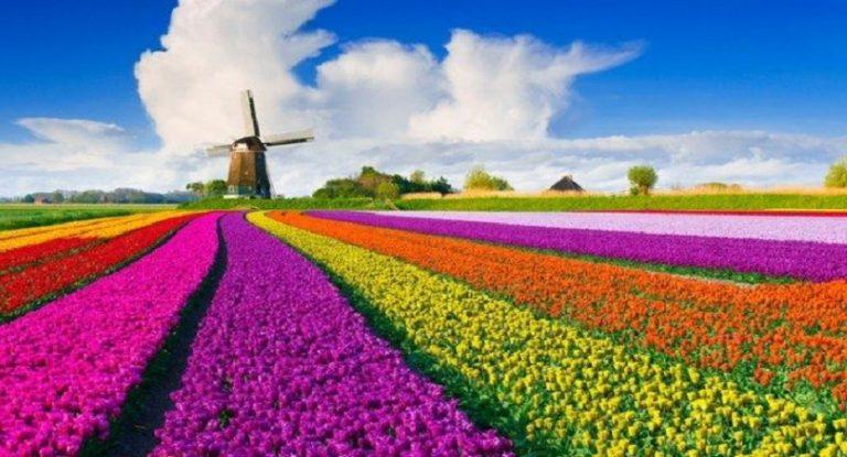 I tulipani e l'Olanda