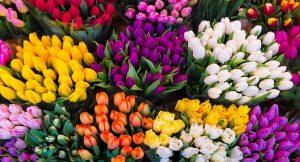 Leggende e linguaggio dei tulipani