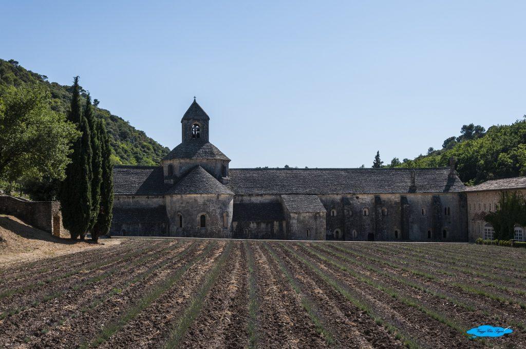 provenza tra natura e arte: abbazia di senanque