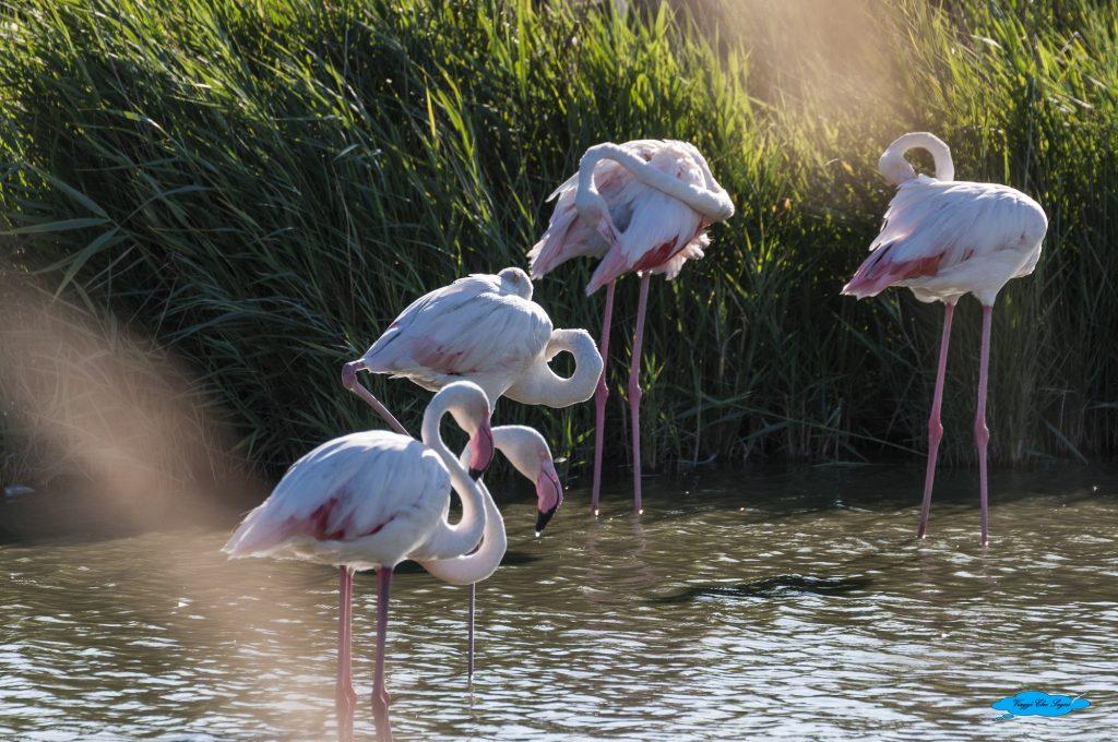 provenza tra natura e arte: parco ornitologico2