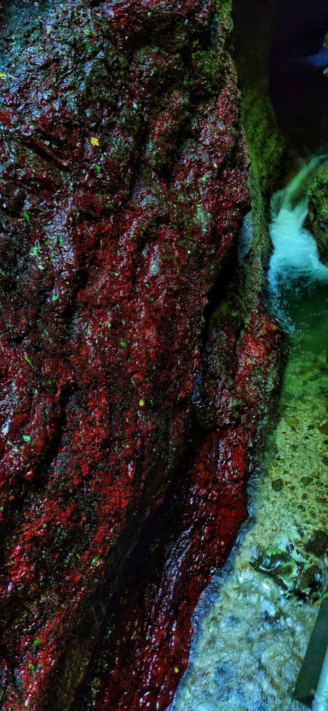 trekking al canyon del rio sass: i licheni